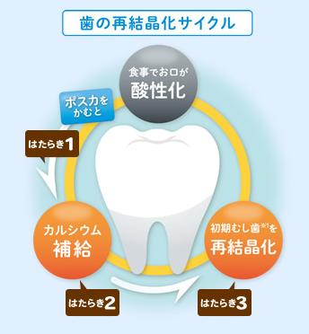歯の再結晶化